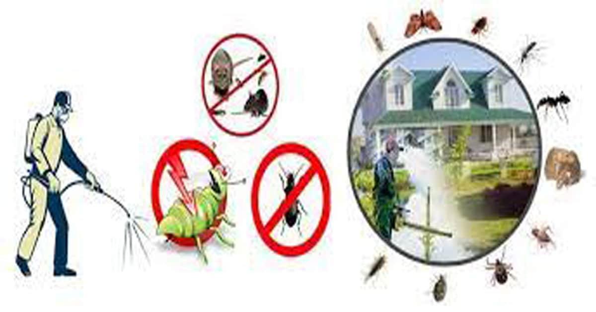 افضل شركة مكافحة حشرات بالدلم