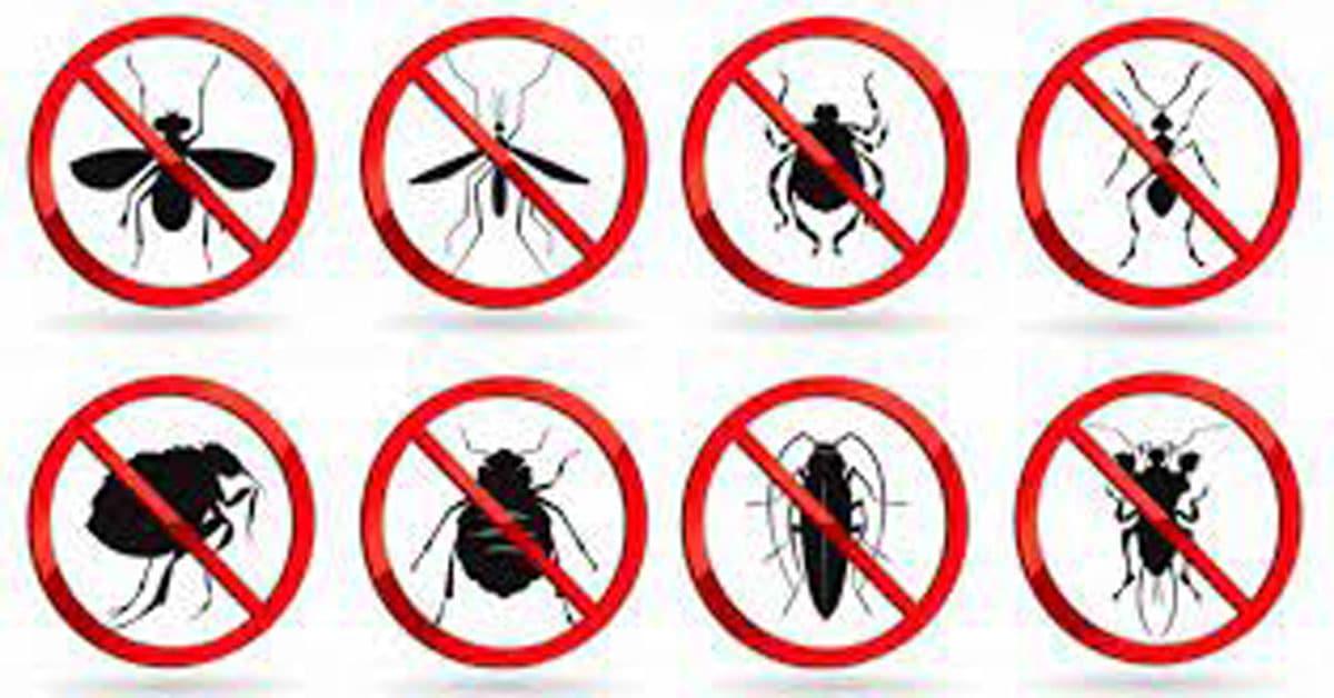 افضل شركة مكافحة حشرات بالدمام