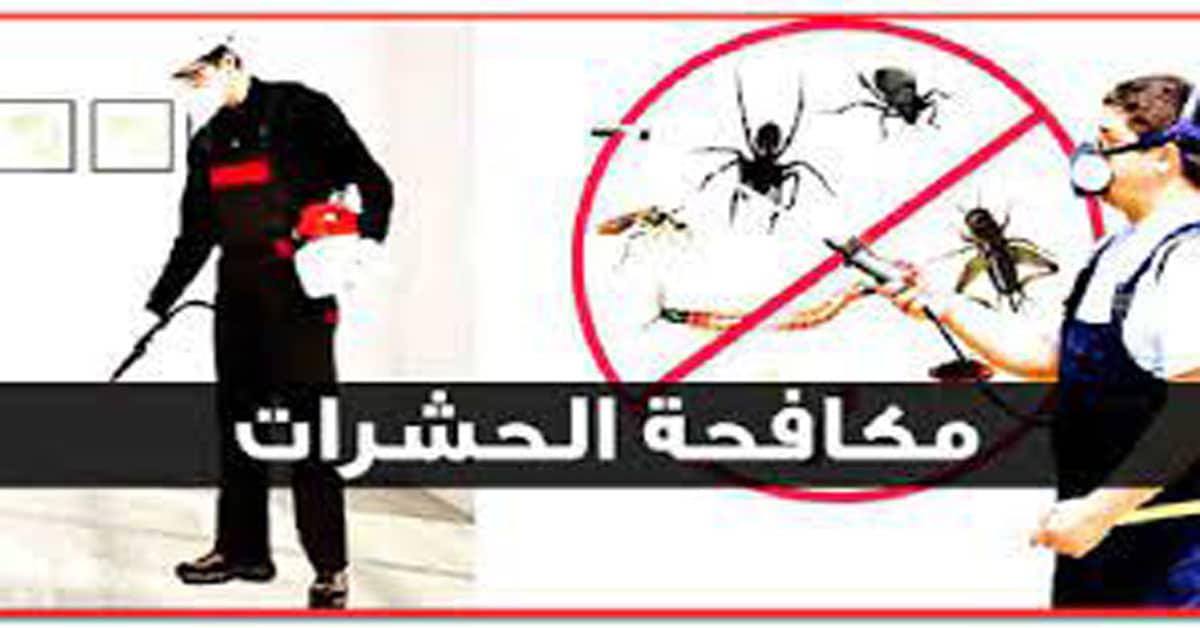 افضل شركة مكافحة حشرات بالقويعية