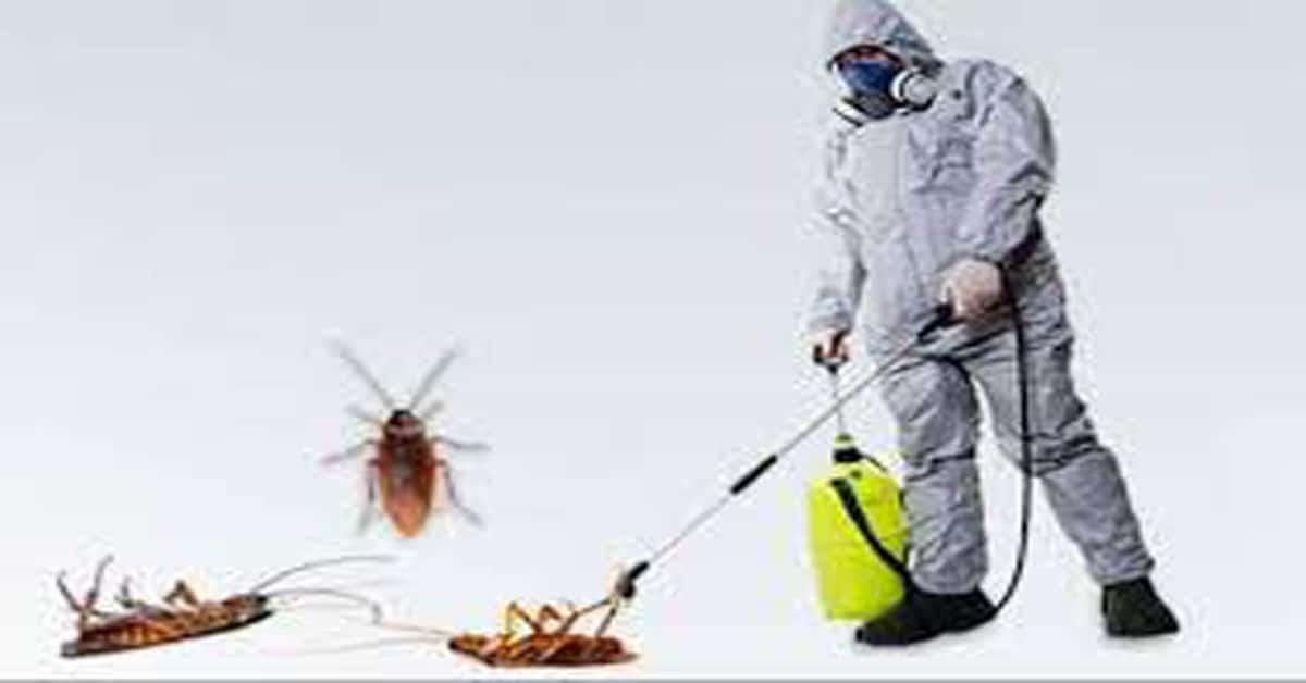 افضل شركة مكافحة حشرات بحوطة بني تميم