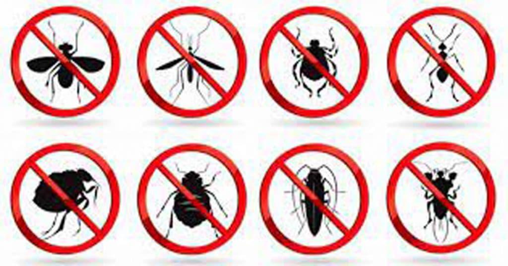 افضل شركة مكافحة حشرات برماح
