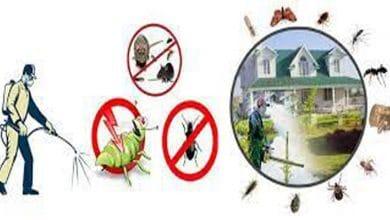 ارخص شركة مكافحة حشرات بالأفلاج