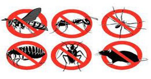 افضل شركة مكافحة حشرات بالحريق