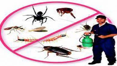 افضل شركة مكافحة حشرات بالزلفي