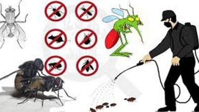 افضل شركة مكافحة حشرات ببريدة