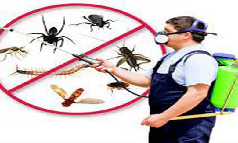 افضل شركة مكافحة حشرات بالسليل